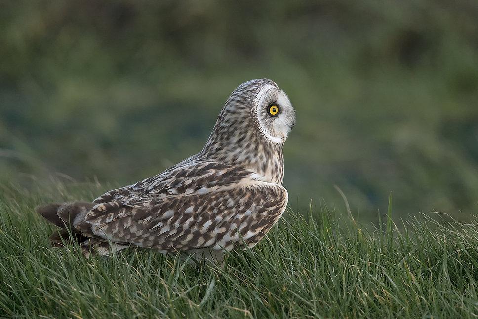 Vogelfotografie, Velduil