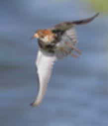 Vluchtfoto Kemphaan.
