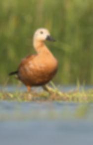 Vogelfotografie Casarca.