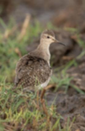 Vogelfotografie Bosruiter.