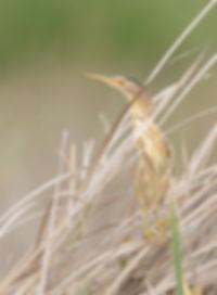 Vogelfotografie Toledo, Spanje,  Woudaap.
