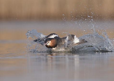 De waterspetters vliegen in het rond door de grote snelheid.