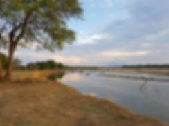 Zambia, South Luangwa.
