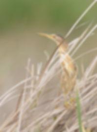 Vogelfotografie Woudaap.