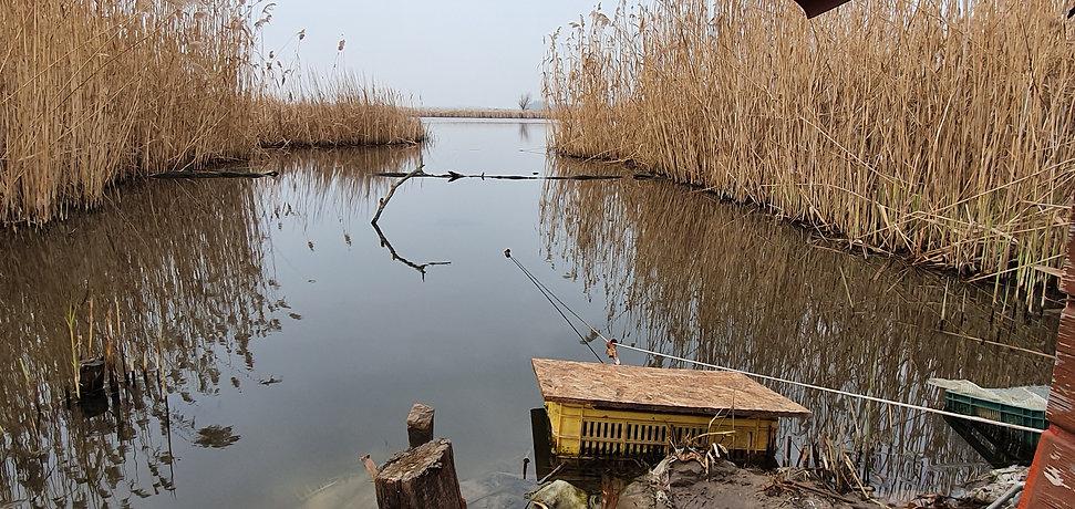 Vogelfotografie, Hongarije, setting IJsvogelhut.