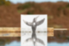 IJsvogel-richtpunt_DSC0005.jpg