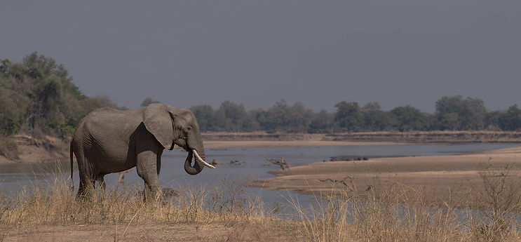 Olifant (Elephant) Nsefu, South Luangwa.
