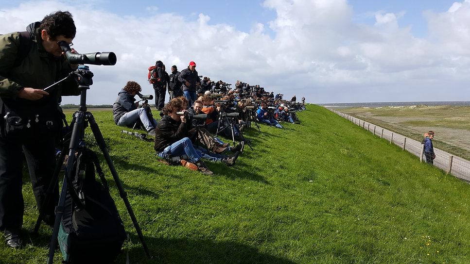 Wad- en Kustvogels, een zeldzame vogel op Texel gespot, trekt veel vogelaars.