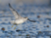 Vogelfotografie, Kanoet