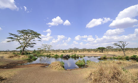 Fotografie Tanzania & Kenia, Olifant.