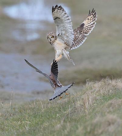 Vogelfotografie Velduil.