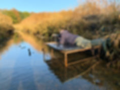 Waterral, vogelfotografie plek, Schotland