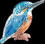 blue bird 5.png
