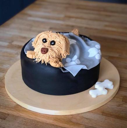 Dog/Puppy Cake | Kingfisher Bakery, Wiltshire, UK