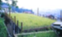 NEST011_edited.jpg