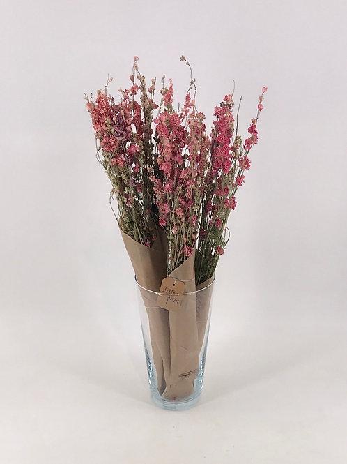 Rittersporn rosa natur im Bund