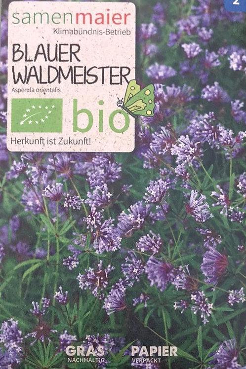 Blauer Waldmeister