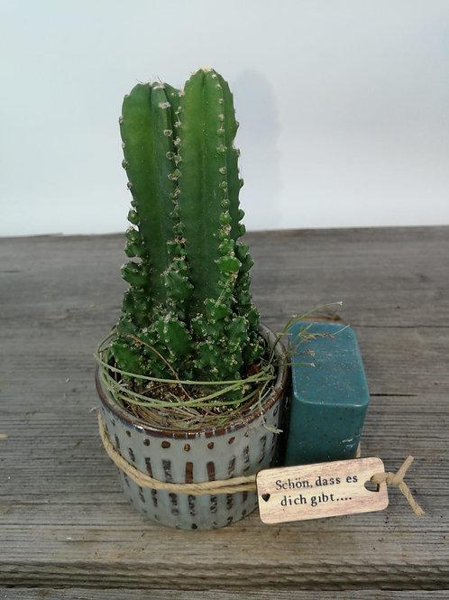 Der kleine grüne Kaktus