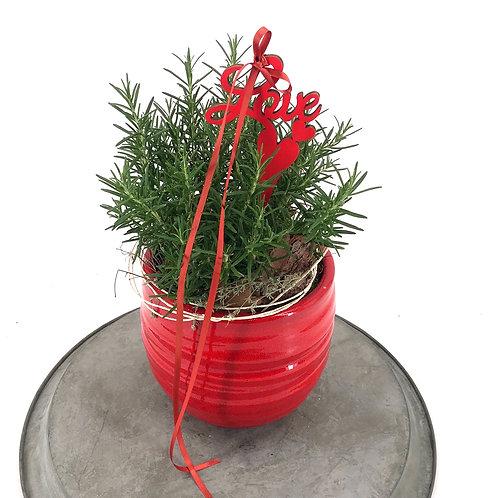 Rosmarin im roten Edeltopf dekoriert