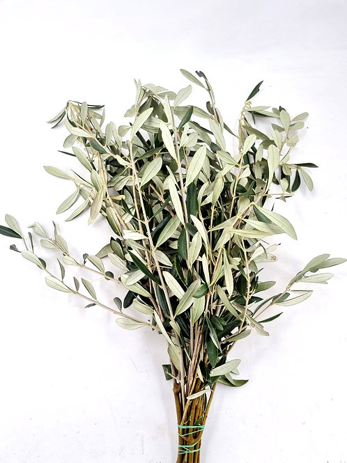 Olive gebündelt