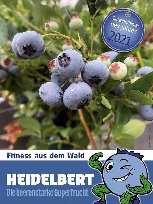 Heidelbert - Gartenpflanze 2021