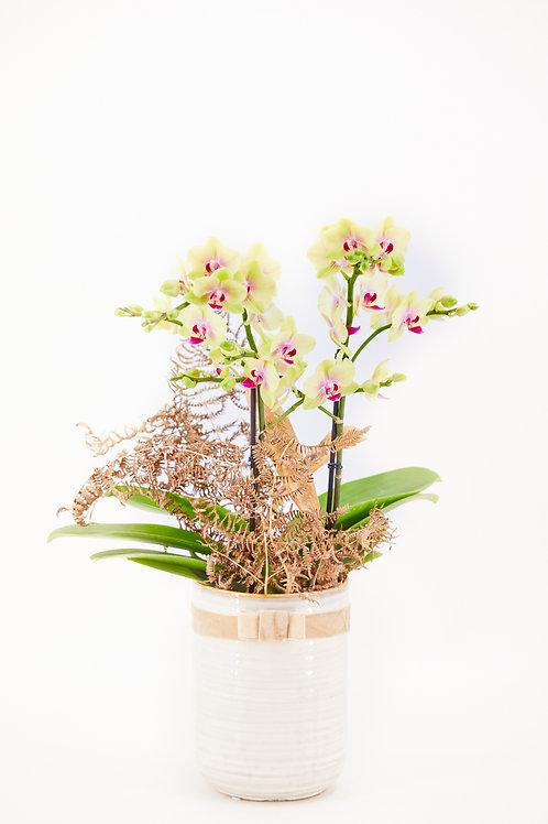Verzweigte Orchidee dekoriert
