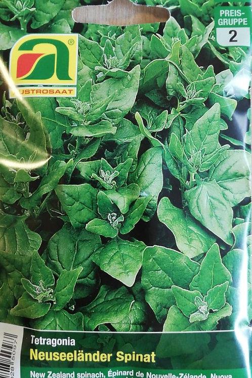 Neuseeländer Spinat - Samen