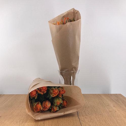 Tulpenbund (9stück)