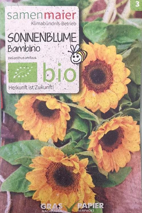 """Sonnenblume """"Bambino"""""""