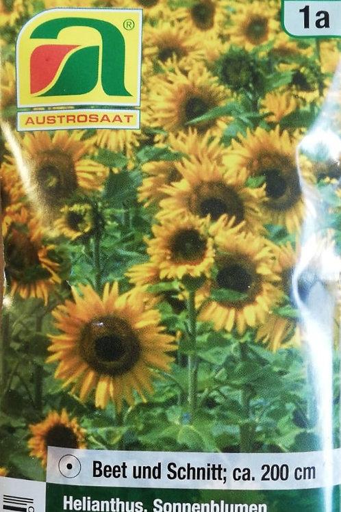 Sonnenblumen - Samen
