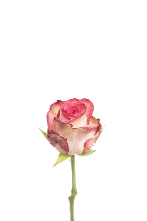 Paloma - Rosenbündel aus Grazer Produktion (10 Stück)