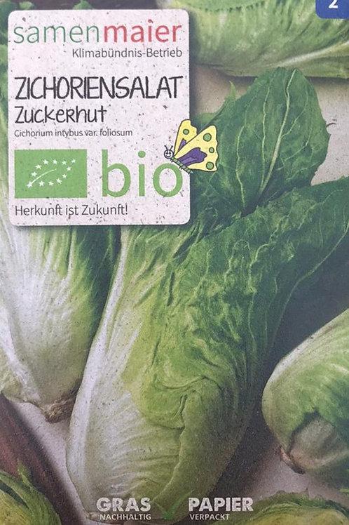 "Zichoriensalat ""Zuckerhut"""