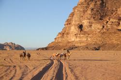 Camel riding at Wadi Rum