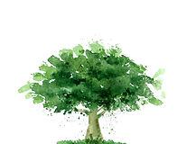 tree logo final 3.jpg
