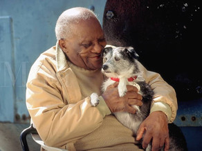 How Can Dogs Help Alzheimer's Patients?