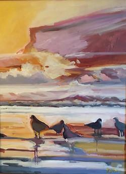 Belmar Birds