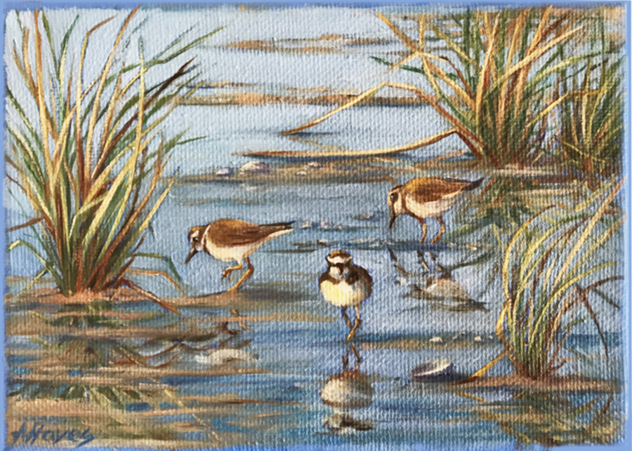 """Marsh Plovers"""