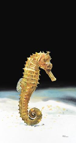"""Lined Sea Horse"""
