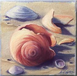 Shells #16 Moon Snail Shell