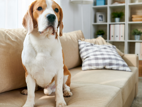 FACT: Your Pet is Affecting the Air Quality of Your Home