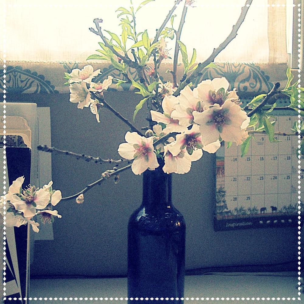 פריחת עצי הפרי בחדר העבודה שלי
