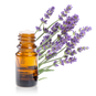 IMGBIN_english-lavender-lavender-oil-ess