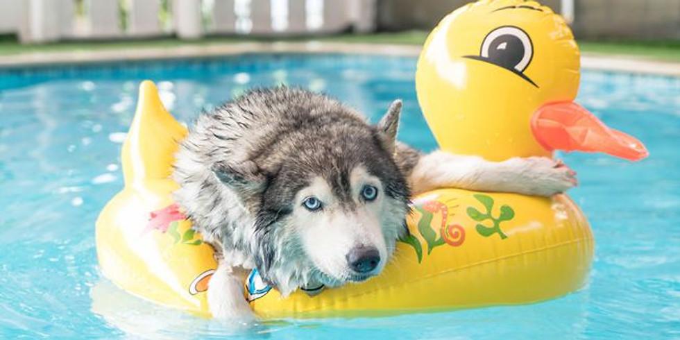 Dog Days of Summer Event