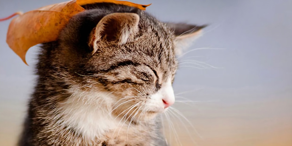 September 12th Cat Distribution Day