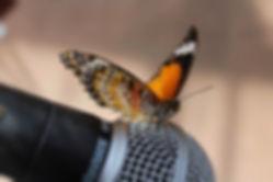 Nouveau Papillon Contact Page