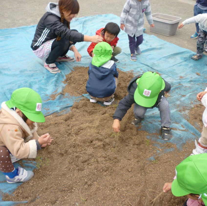 土を綺麗にします!