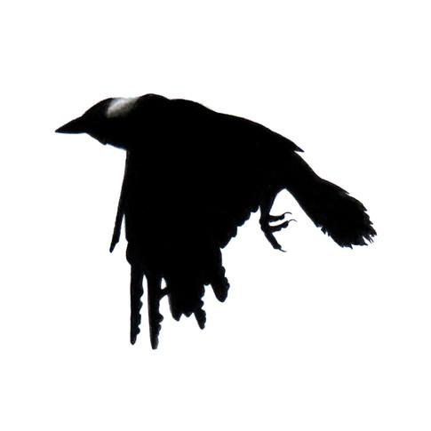 Murder Crow 23