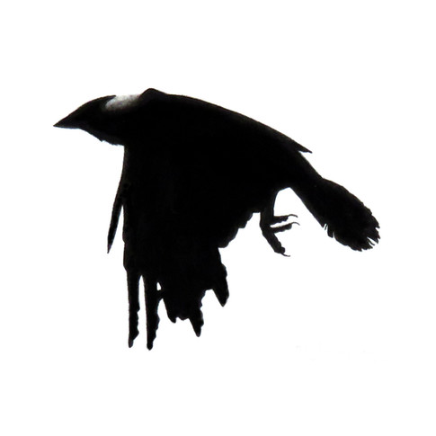 Murder Crow 22