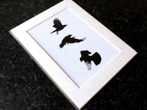 mounted art print with three different flying crows on a white background