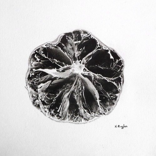 pencil drawing of a dried lime for a miniature still life study framed in oak